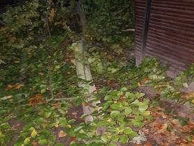 Oktober November 2017 Sturmschäden (3)