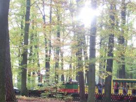 der ADLER_in_der_Herbstsonne