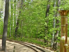 durch den Fruehlingswald