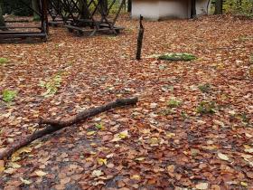 Oktober November 2017 Sturmschäden (5)