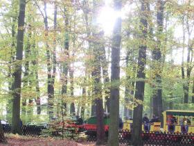 auf_durch_den_Herbstwald